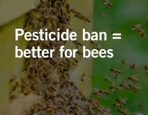 Neonicotinoid Pesticides Effects on Humans