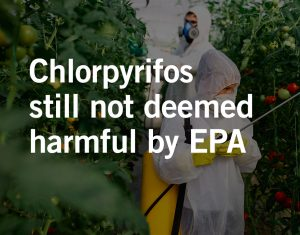 Birth defects due to pesticide exposure